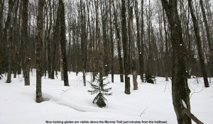 An image of some glades for skiing along the Monroe Trail on Camel's Hump in Vermont