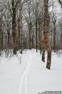 An image of a ski track traversing along Camel's Hump in Vermont