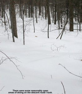 An image of a tree skiing area above the Monroe Trail on Camel's Hump in Vermont