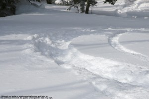 An image of a track from powder skiing in the Bolton Valley backcountry