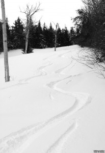 Image of track on the Glades trail at Bolton Valley