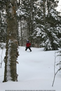 Image of Dylan skiing in the Wood's Hole Glades