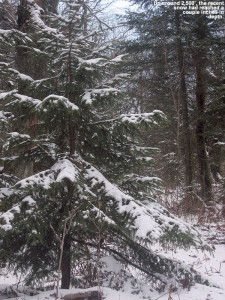 An image of November snow on the trees and ground up at Bolton Valley Resort in Vermont