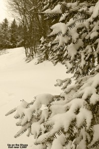 An image of fresh snow on an evergreen at Bolton Valley Resort in Vermont