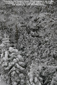 An image of evergreens caked with snow at Bolton Valley ski resort in Vermont after about a foot of snow
