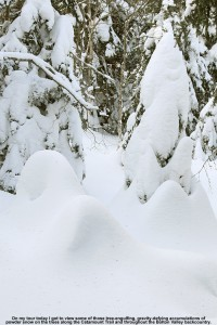 An image of evergreens caked and buried with powder snow along the Catamount Ski Trail north of Bolton Valley Ski Resort in Vermont
