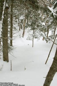 An image of a ski line through the trees above the Catamount Trail on Bolton Mountain, north of Bolton Valley Ski Resort in Vermont