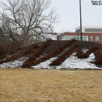 "A dusting of snow is seen on the mulch surround the ""UVM"" bushes at the University of Vermont"