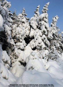 An image of snow on evergreens near the summit of the Fourrunner Quad at Stowe Mountain Ski Resort in Vermont