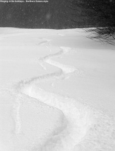 An image of ski tracks in powder on the Spell Binder trail at Bolton Valley Ski Resort in Vermont