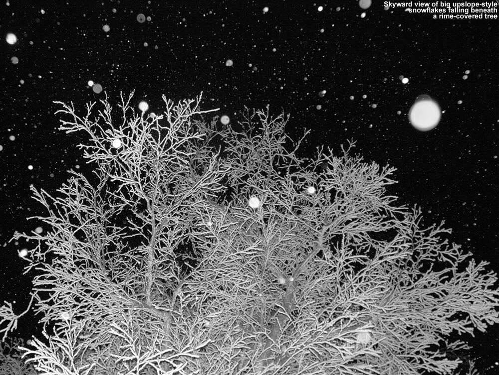 An image of a rime-covered tree with snowflakes falling against a night sky at Bolton Valley Ski Resort in Vermont
