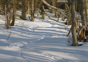 An image of ski tracks in powder on the backcountry network at Bolton Valley Resort in Vermont