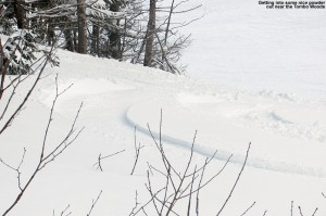 An image of a ski track in powder in the Tombo Woods area at Stowe Mountain Resort in Vermont
