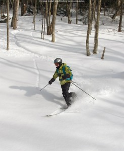 An image of Erica skiing powder in one of the glades in the Nordic and Backcountry network at Bolton Valley Resort in Vermont
