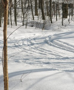 An image of the World Cup Nordic Trail at the Bolton Valley Cross Country Ski Center in Vermont