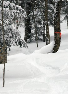 An image of a ski track in powder in the Villager Trees area of Bolton Valley ski Resort in Vermont