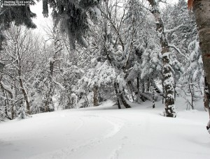 An image of a ski track in powder in the terrain off the back side of Bolton Valley Resort in Vermont
