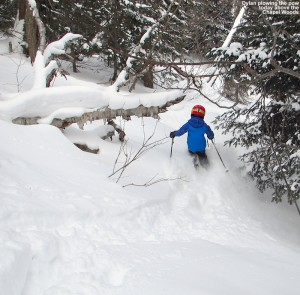An image of Dylan skiing powder in the trees above the Chapel Glades at Stowe Mountain Resort in Vermont