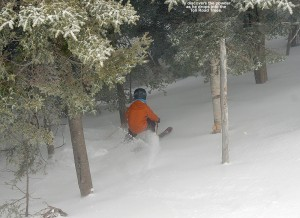 An image of Ty dropping into some April powder in the Toll Road trees at Stowe Mountain Ski Resort in Vermont