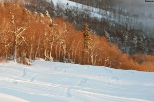 An image of ski tracks in the powder on the National trail at Stowe Mountain Resort in Vermont