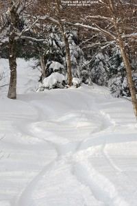 An image of ski tracks on the Goat trail at Stowe Mountain Resort in Vermont