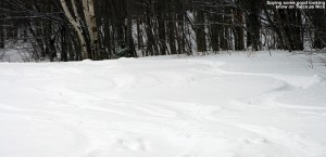 An image of ski tracks in powder on the Twice as Nice ski trail at Bolton Valley Resort in Vermont