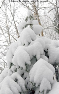 An image of a snowy evergreen tree in the woods at Bolton Valley Ski Resort in Vermont