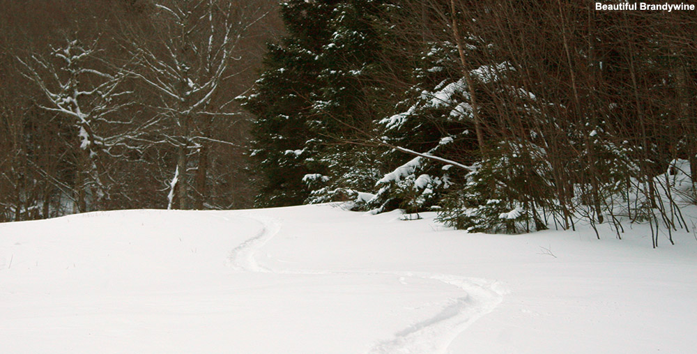 An image of a ski track in powder snow on the Brandywine trail at Bolton Valley Ski Resort in Vermont