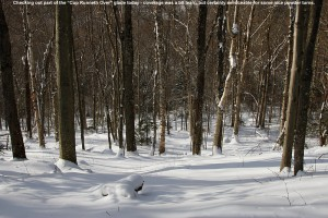 "An image of the ""Cup Runneth Over"" glade on the backcountry network at Bolton Valley Ski Resort in Vermont"