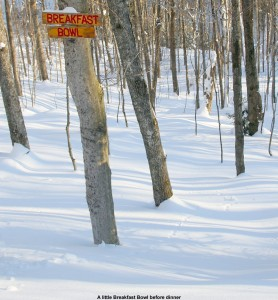 "An image of the ""Breakfast Bowl"" sign and glades at  Bolton Valley Ski Resort in Vermont"