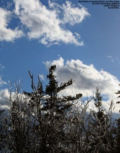 An image of some ice-covered trees and sunny skies at the mid station of the Timberline Lift at Bolton Valley Ski Resort in Vermont