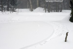 An image of ski tracks in one of the glades off the Monroe Trail  on the east side of Camel's Hump in Vermont