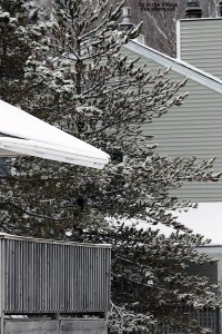 An image of snow on roofs and trees in the Bolton Valley Village in Vermont