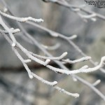 An image of rime and ice on a branch at the base of the Timberline area at Bolton Valley Ski Resort in Vermont