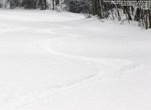 An image of ski tracks in powder snow on the Lower Turnpike trail at Bolton Valley Ski Resort in Vermont