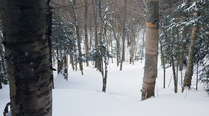 Bolton Valley & Backcountry, VT 17JAN2015