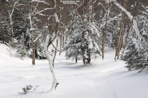 An image looking down Randy's glade on the back side of Bolton Valley Ski Resort in Vermont