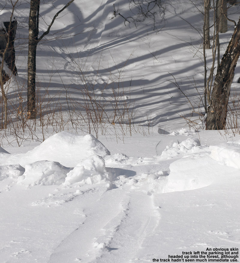 An image showing a skin track heading off into the forest for backcountry skiing in the Nebraska Valley area of Vermont