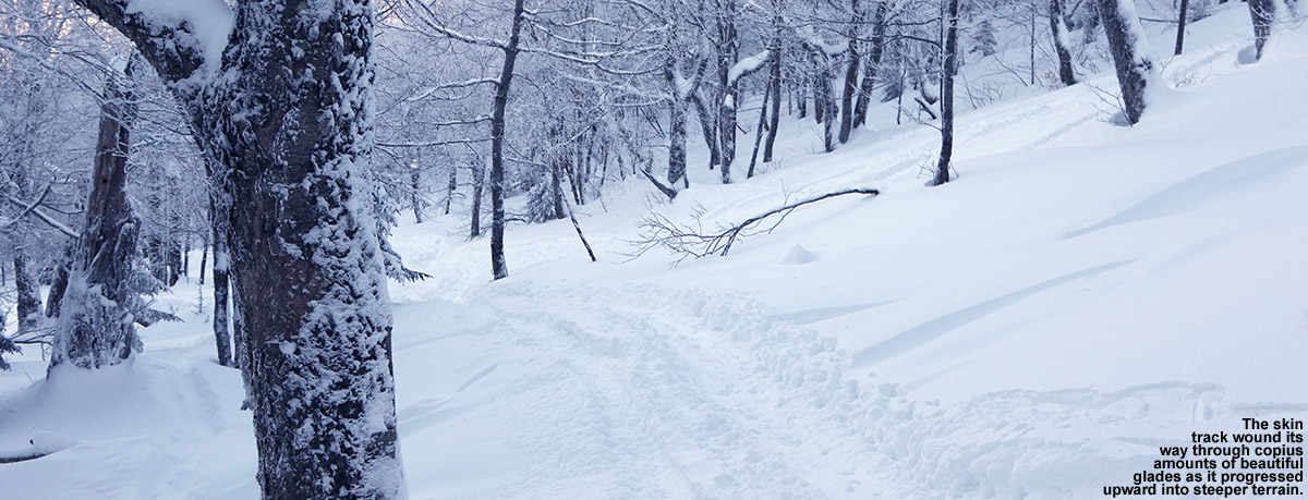 An image showing a skin track for backcountry skiing access among glades on the west face of Dewey Mountain in Vermont