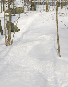 An image of ski tracks in backcountry powder in the Bolton Notch are of Vermont