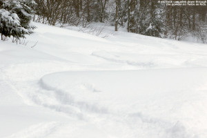 An image of ski tracks in dry powder snow on the Twice as Nice trail at Bolton Valley Ski Resort in Vermont