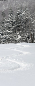 An image of a ski track in powder on the Tattle Tale trail at Bolton Valley Resort in Vermont