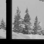 An image of some evergreens high on Mt. Mansfield as viewed from the Octagon building at Stowe Mountain Resort in Vermont