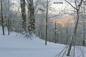 An image showing some ski glades on Dewey Mountain in Northern Vermont