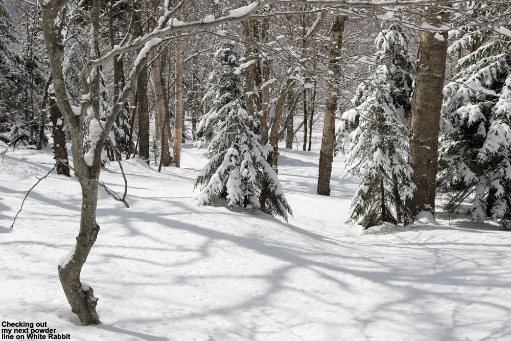 An image of powder snow on the White Rabbit Trail at Bolton Valley Ski Resort in Vermont