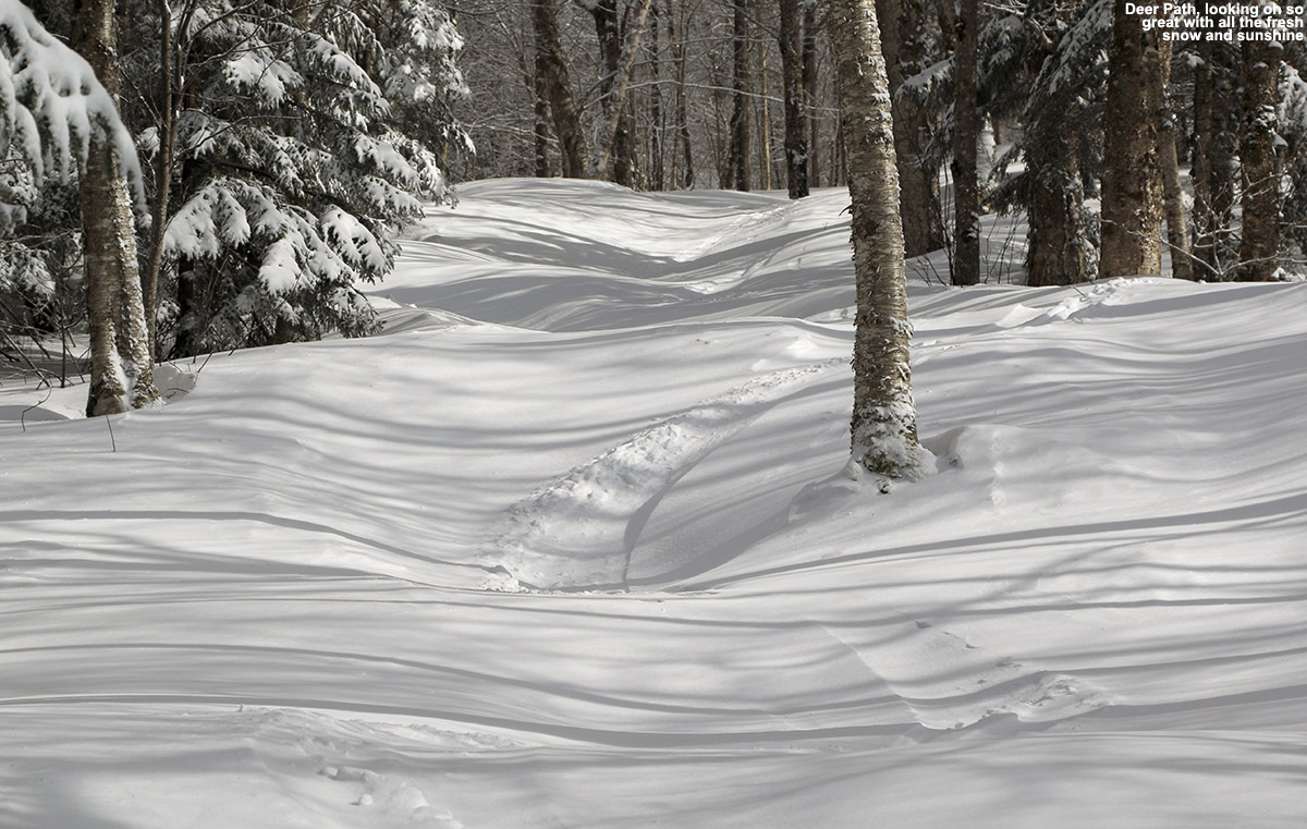 A view of the Deer Path trail with a ski track in some fresh powder at Bolton Valley Ski Resort in Vermont