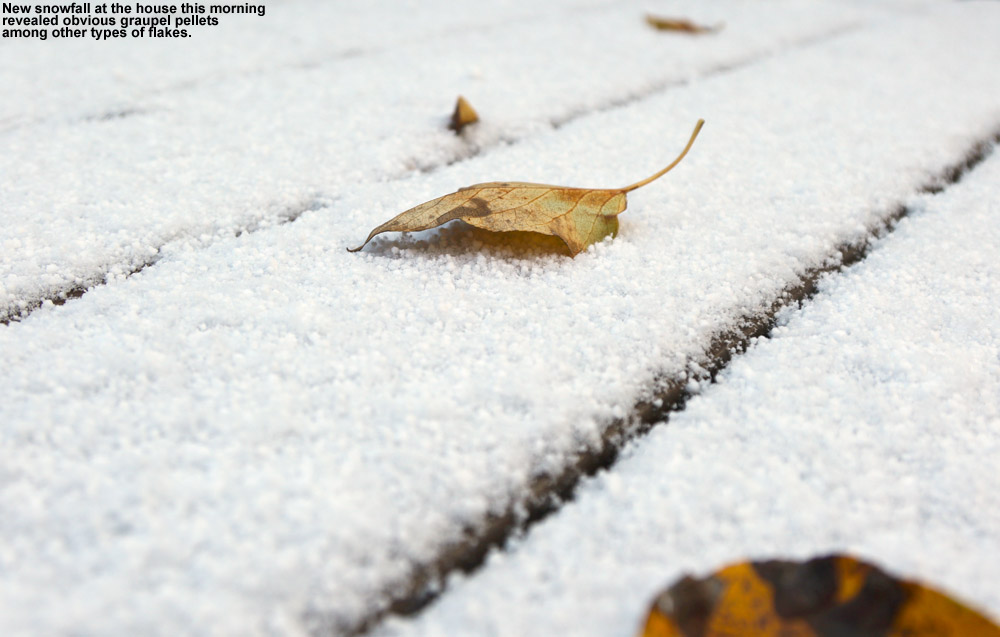 An image of snow and leaves from an October snowfall in Waterbury, Vermont