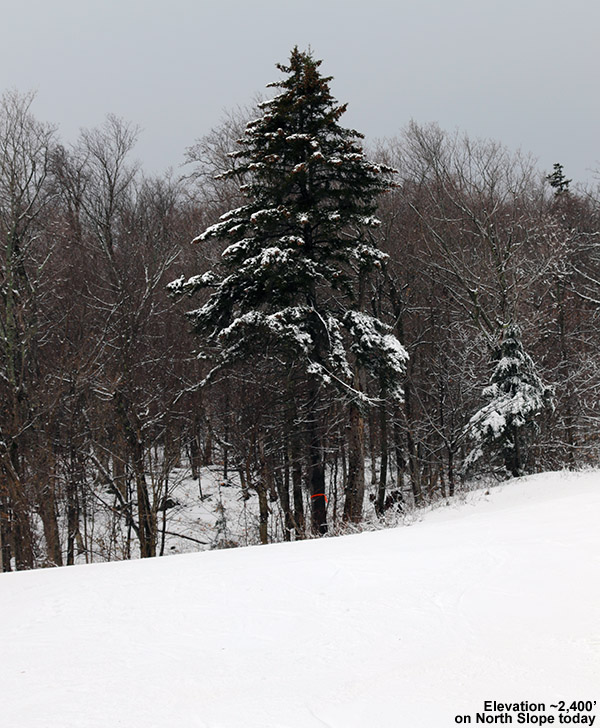 An image of a snowy tree along the North Slope trail at Stowe Mountain Resort in Vermont