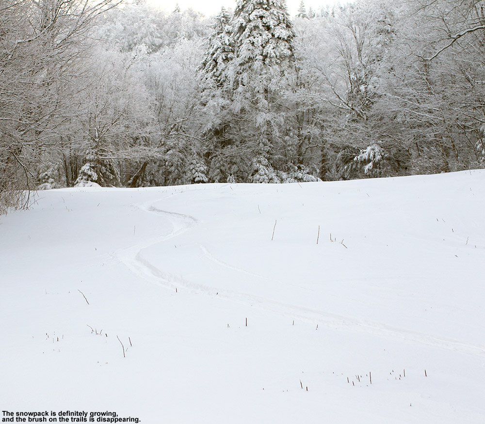 An image of ski tracks in fresh powder on the Cougar trail at Bolton Valley Resort in Vermont