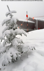 An image of a snowy evergreen by the Cliff House on Mt. Mansfield at the top of Stowe Mountain Resort in Vermont